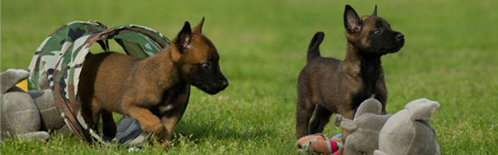 Hondenschool Happy Dogs Puppycursussen en